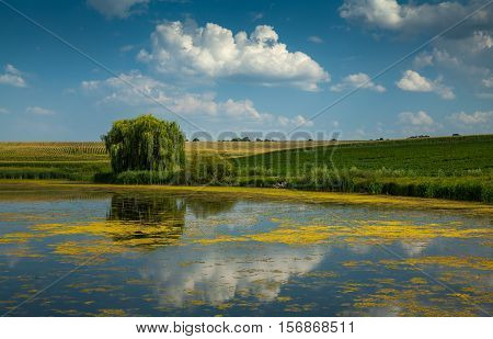 Pond among the fields in which clouds are reflected