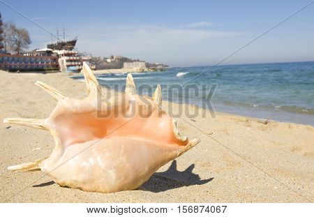 Big shell on sand near water and sailing ship behind on beach of Saint Constantine and Helen resort, Bulgaria