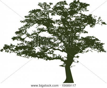 Vector of an oak tree silhouette