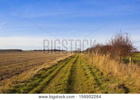 Bridleway With Hawthorn