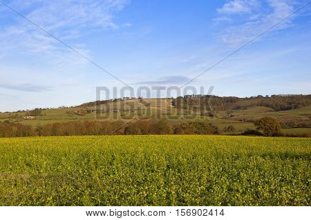 Mustard Crop With Scenery