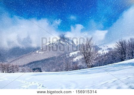 Winter landscape with snow covered trees and snowstorm