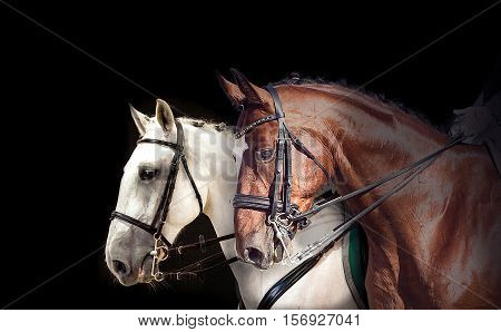 Two dressage horses in competition on black bakground