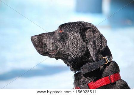 a dog having fun at a local public pool
