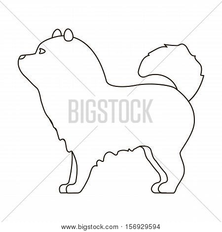 Chow-chow icon in outline style isolated on white background. Dog breeds symbol vector illustration.