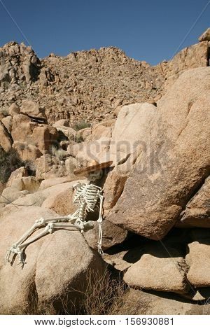 A skeleton wearing a sombrero lays against granite boulders in the Joshua Tree National Forest of California. Could be a lost hiker who never found his way home or a crime scene yet to be solved.