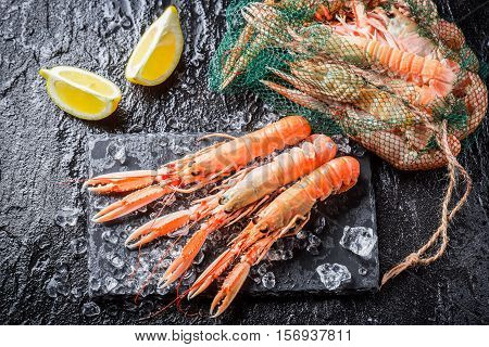Closeup Of Fresh Scampi On Black Rock