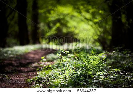 beautiful natural green background fern forest grass in the forest beautiful spring nature forest in spring
