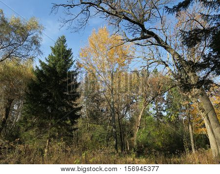 Southern Unit of the Kettle Moraine forest during fall in Wisconsin