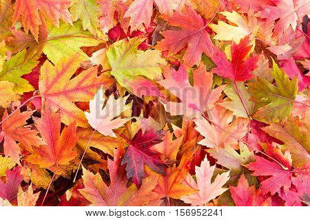 Dry Bed Of Colorful Autumn Leaves On The Ground