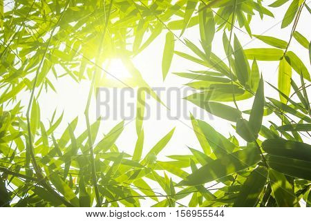 Green bamboo leaves or with background .Green Energy.isolated spring summer or chistmas.