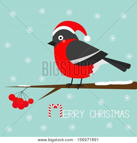 Bullfinch winter red feather bird sitting on rowan rowanberry sorb berry tree branch. Santa hat. Cute cartoon funny character. Baby collection. Blue snow background Flat design. Vector illustration