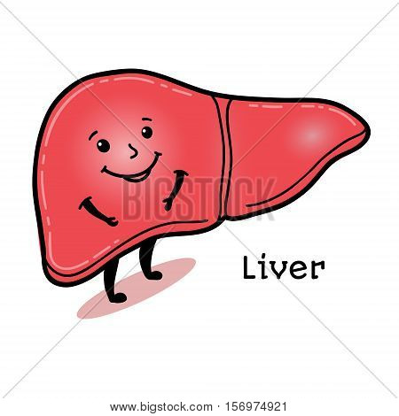 Cute and funny human liver character, cartoon vector illustration isolated on white background. Healthy smiling liver character with arms and legs