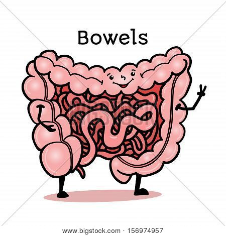 Cute and funny human guts, bowels, intestines character, cartoon vector illustration isolated on white background. Healthy smiling guts, bowels, intestines character with arms and legs