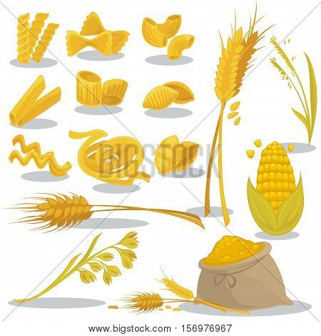 Vector set foods of wheat. Italian cuisine pasta and macaroni, fusilli, spaghetti and penne, farfalle and tagliatelle. Cartoon illustration isolated on white background.