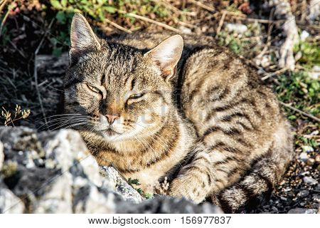 Domestic cat - Felis catus posing in outdoors. Animal portrait. Beauty in nature.