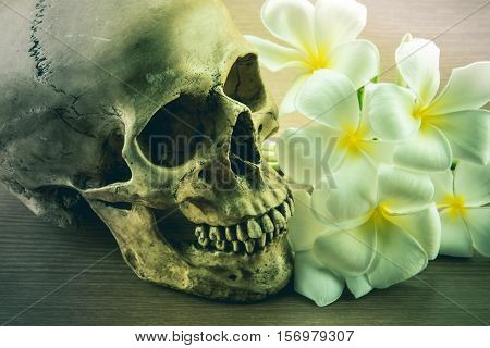 Still Life with a Skull and Plumeria flowers concept with Halloween