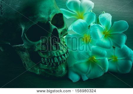 Still Life with a Skull and Plumeria flowers concept Halloween,Dark tone