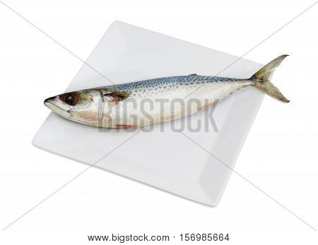 Uncooked not gutted bullet tuna on a square white dish on a light background