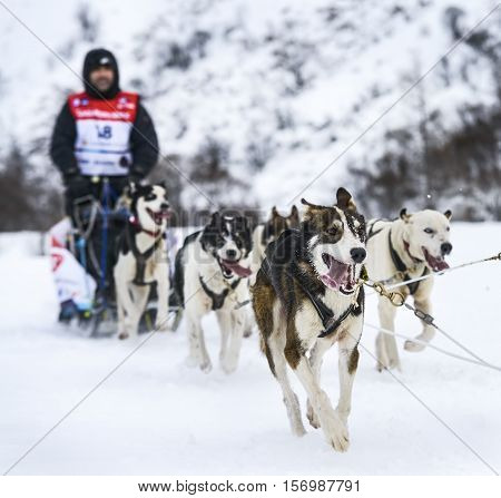 SARDIERES VANOISE FRANCE - JANUARY 18 2016 - the GRANDE ODYSSEE the hardest mushers race in savoie Mont-Blanc Julian ZufiaurreSuso spain musher Vanoise Alps