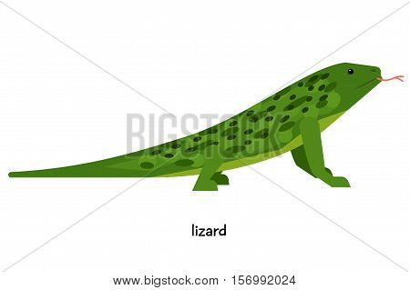 Lizards -  master of disguise. Merging with ground, grass, stone, tree trunk, it becomes completely invisible.