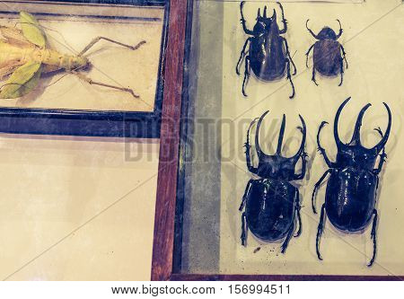 Image Of Collection Of Insect .