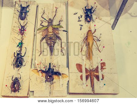 Image Of Collection Of Beetle With Pin