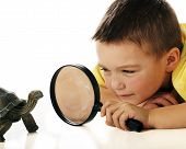 A kindergarten boy studying a turtle through a magnifying glass. poster