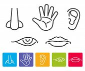 Five human senses smell, sight, hearing, taste, touch vector. Icons human sense, illustration of five senses poster