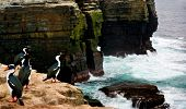 A Cormorant shakes its head and sprays water everywhere on a cliff edge poster