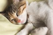 little cat sleep on bed poster