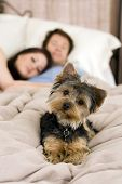 Happy couple laying in bed with their dog - focus on dog poster