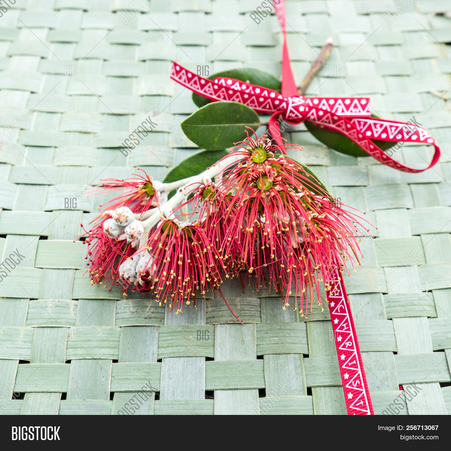 New Zealand Christmas Image Photo Free Trial Bigstock