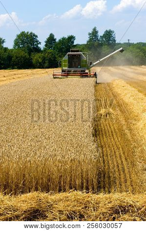A Combine Machine Is Busy With Harvesting The Grain In The Summr In Germany