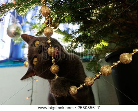 naughty cat chewing on christmas tree decorations - Black Cat Christmas Tree Decoration