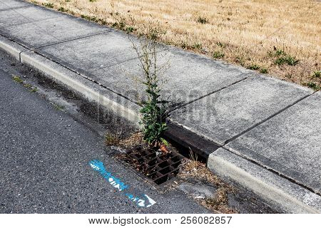 Curbside Storm Drain Clogged With Debris And A Growing Plant