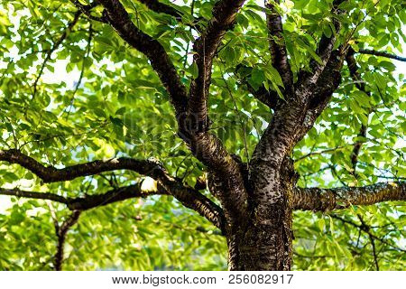 Tree Branches Under The Forest Canopy With Light Passing Through The Leaves