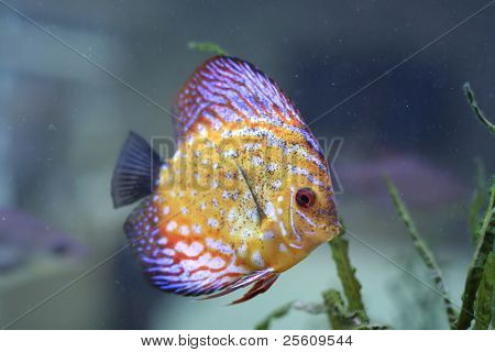 beautyfull color fish in aquarium