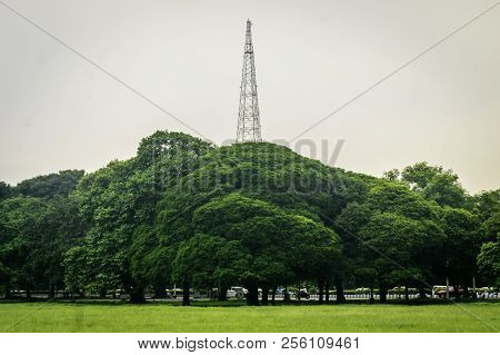 Old Oak Trees On Meadows. A Field On Which Grows Tall Oak Trees, A Summer Landscape In Sunny Warm We