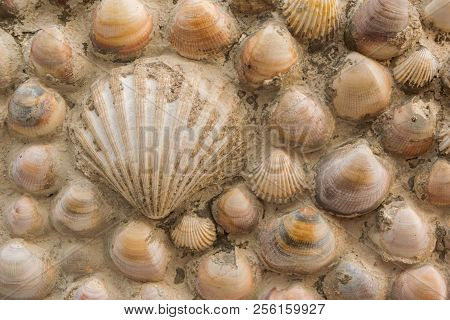 Seashells On The Facade Of A House. Backgrounds.