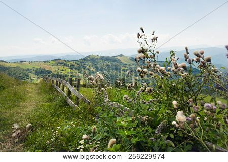 Mountain Flowers Landscape. Old Fence In Countryside Landscape. Lonely Road In Countryside Landscape