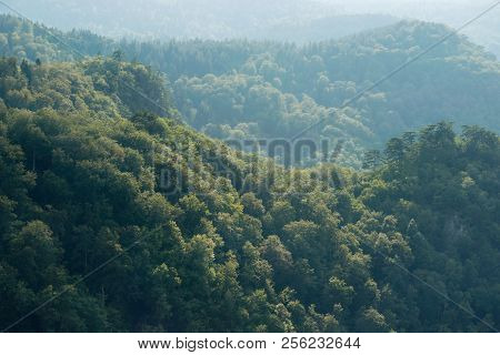 Mountain Trees Environmental Background. Texture Of Mountain Trees Background. Mountain Trees Layers