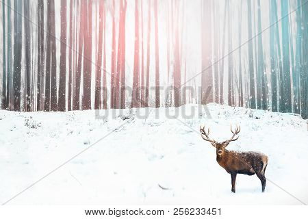 Noble Deer In The Background Of A Winter Fairy Forest. Snowfall. Winter Christmas Holiday Image.