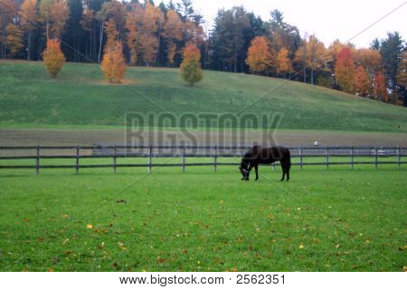 Single horse grazing in a new england pasture during the fall poster