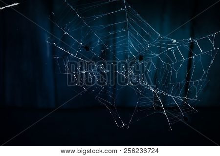 Spider Web Close-up On A Dark Abstract Background. Background Halloween