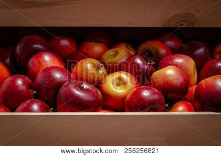 Apples In Wooden Box. Nice Red And Yellow Fruits In Brown Box.