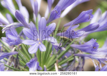 Beautiful Purple Flowers In Spring For Backgrounds