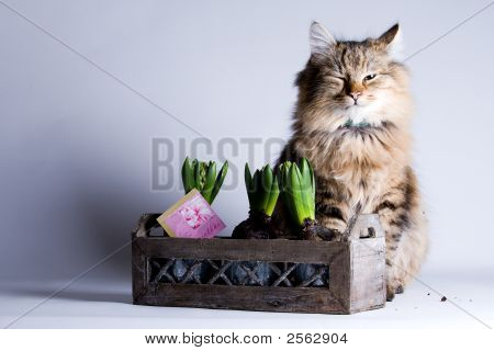 Young beautiful cat is sitting behind a flower poster