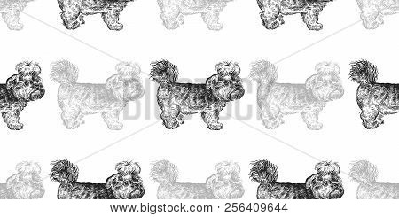 Yorkshire Terrier  Vector & Photo (Free Trial) | Bigstock