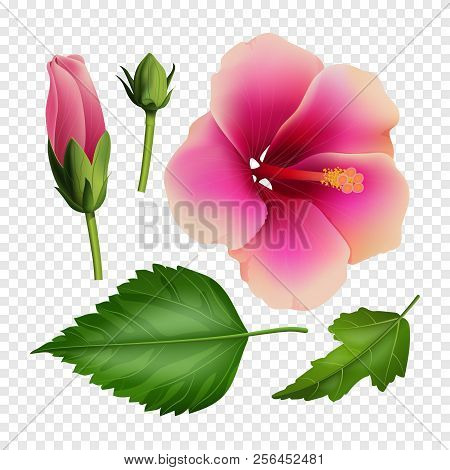 Set Beautiful Vector Photo Free Trial Bigstock